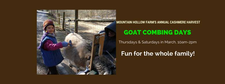 Come to the farm any Thursday or Saturday, 10am -2pm, in March to get up-close and personal with a goat and see why we make such a fuss about cashmere!  It's FREE and fun for all ages! No registration required.  Questions? Call (423) 869-8927 or email store@mtnhollow.com.