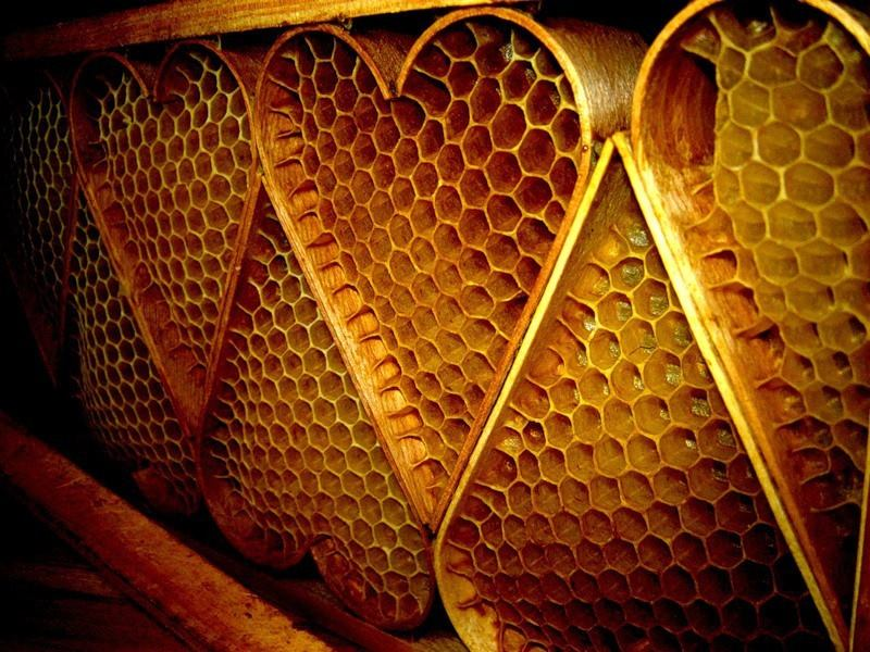 2018 East Tennessee HONEY convention, will be held at Walters State Community College, in Tazewell, TN on April 20 and 21st.  This year we are welcoming hundreds of local beekeepers of all levels coming to learn from over 20 speakers through demonstrations, hands on workshops and lectures. Included in your ticket are International skype presentations, vendors of all things BEE related, concessions and lots of information. Get your tickets early for a chance to win some great door prizes! For more information on speakers, classes, lodging and more, visi t honeyconvention.com