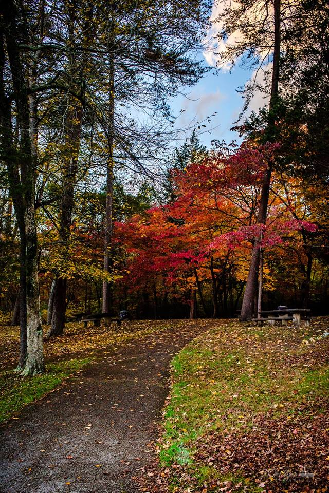 Cove Lake State Park   110 Cove Lake Ln, Caryville, Tennessee 37714  Event is FREE! Pre-Registration is not required but preferred:  https://tnstateparks.com/parks/event_details/cove-lake/#/?event=turkey-trot-2018