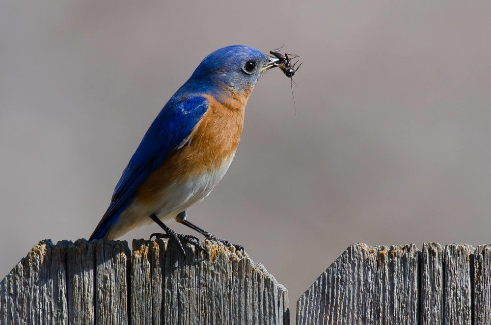 Cove Lake State Park   110 Cove Lake Ln, Caryville, Tennessee 37714  Meet at the Recreation Building Register here:  https://tnstateparks.com/parks/event_details/cove-lake/#/?event=bluebird-house-feb15