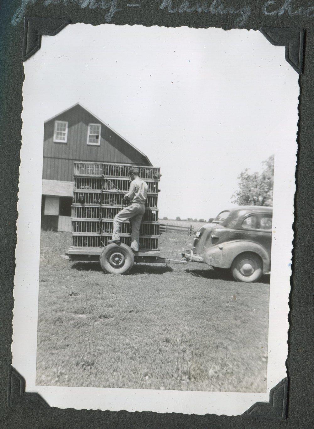 Grandpa Hauling Chickens.jpg