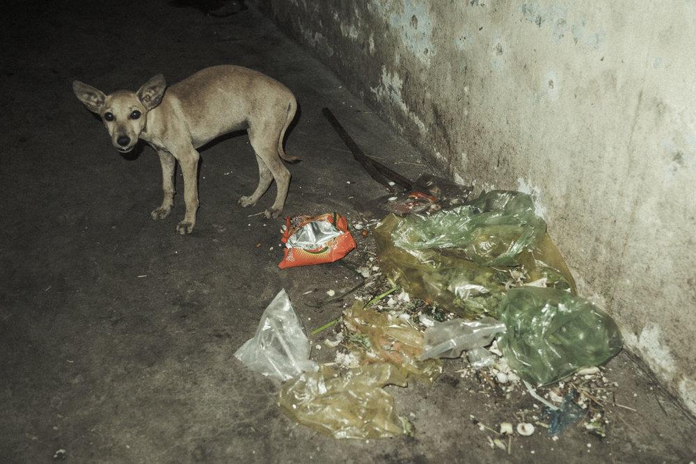 street dog 2015