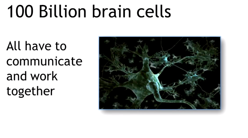 braincells.png