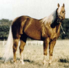 SIRE: FIREWATER FLIT