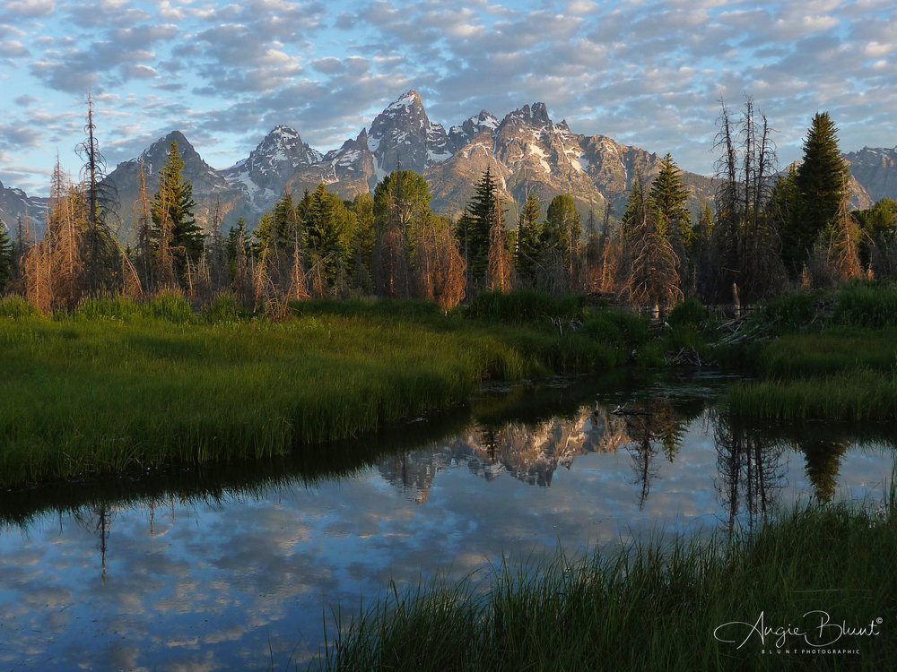 Schwabacher Landing River, Near Jackson Hole, Wyoming (2010) -  Angie Blunt