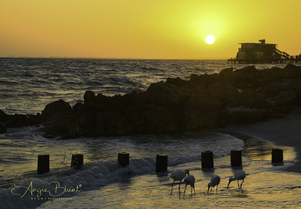 Ibises and The Rod and Reel Pier at Sunrise, Anna Maria, FL (2018) -  Angie Blunt