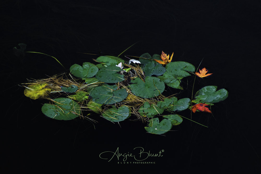 Floating Autumn Colors, Adirondack Park, New York (2018) -  Angie Blunt