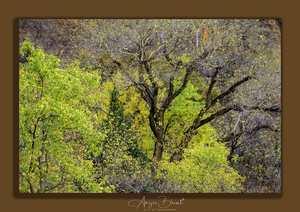 Zion National Park, Utah (November 2017) -  Angie Blunt