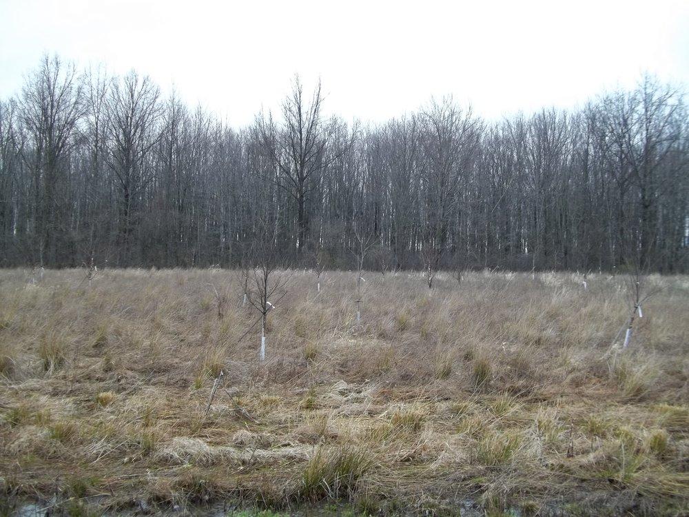 Oberlin College: Afforestation