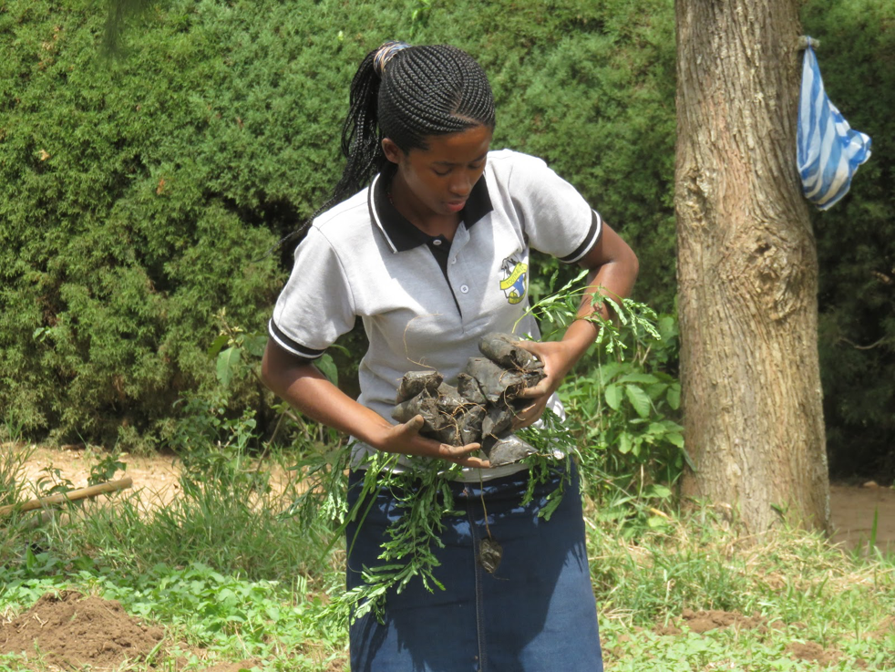 Angella, Program Intern, carries saplings for planting.