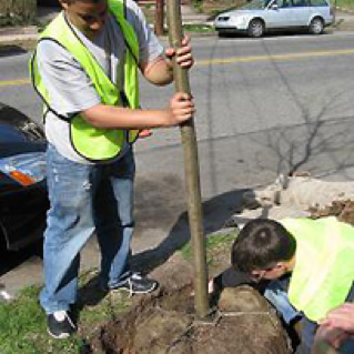 Yale and local high school students, as well as returning citizens, work together to plant street trees through a partnership with Urban Resources Initiative.