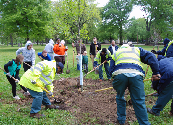 - Duke began planting trees in cities through North Carolina and across the US in 2015. As these trees grow they will sequester carbon and generate carbon credits towards Duke University's carbon commitment, however until a verification occurs to verify the carbon accumulation and growth of these trees this project will await credit generation to assist Duke in reaching its goal. Verification reports and credit generation will be posted as soon as it becomes available.