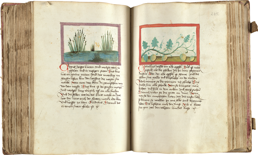 A rare manuscript copy of the 14th-century German  magister  Konrad von Megenberg's  Buch der Natur  is illustrated with drawings about agronomy and natural history.