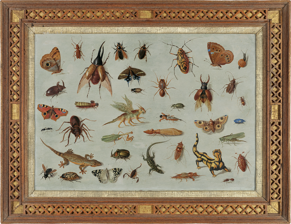 Jan Van Kessel the Elder was a 17th century Flemish painter with a passion for the natural world. You can learn more about his work by watching OSGF's video feature on him  here .