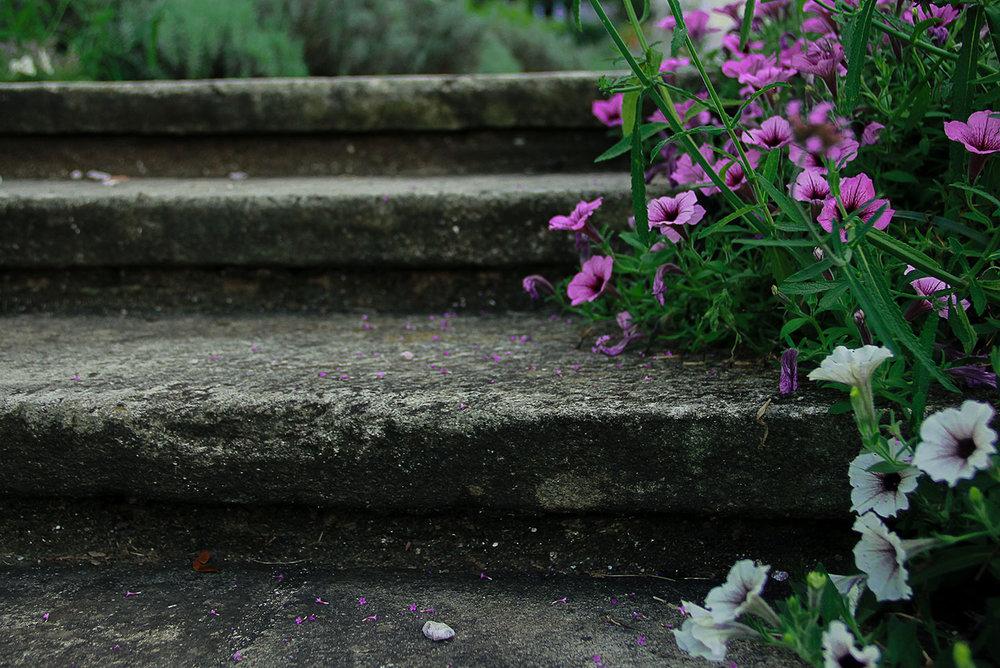 FlowersStepsGarden.jpg