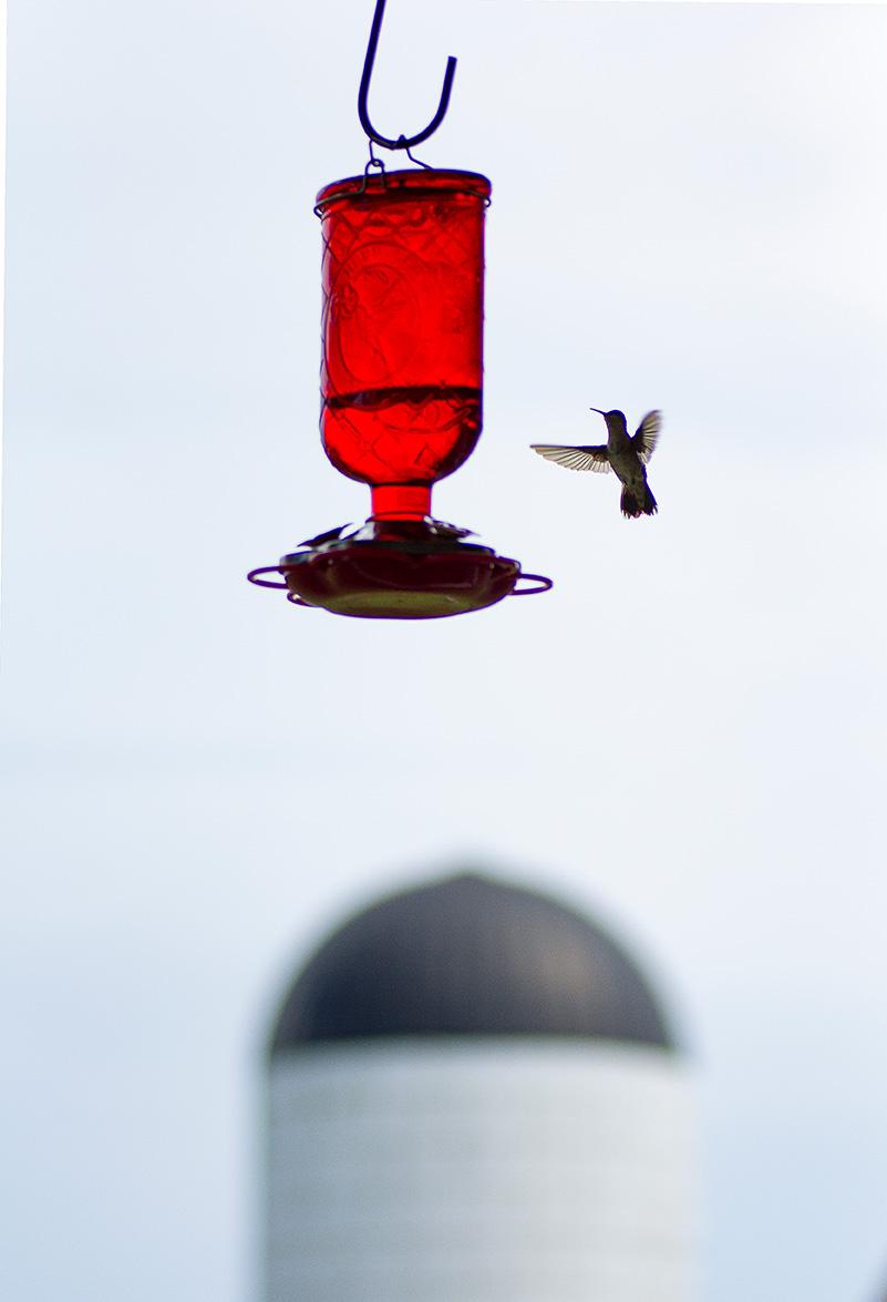 HummingbirdSilo.jpg