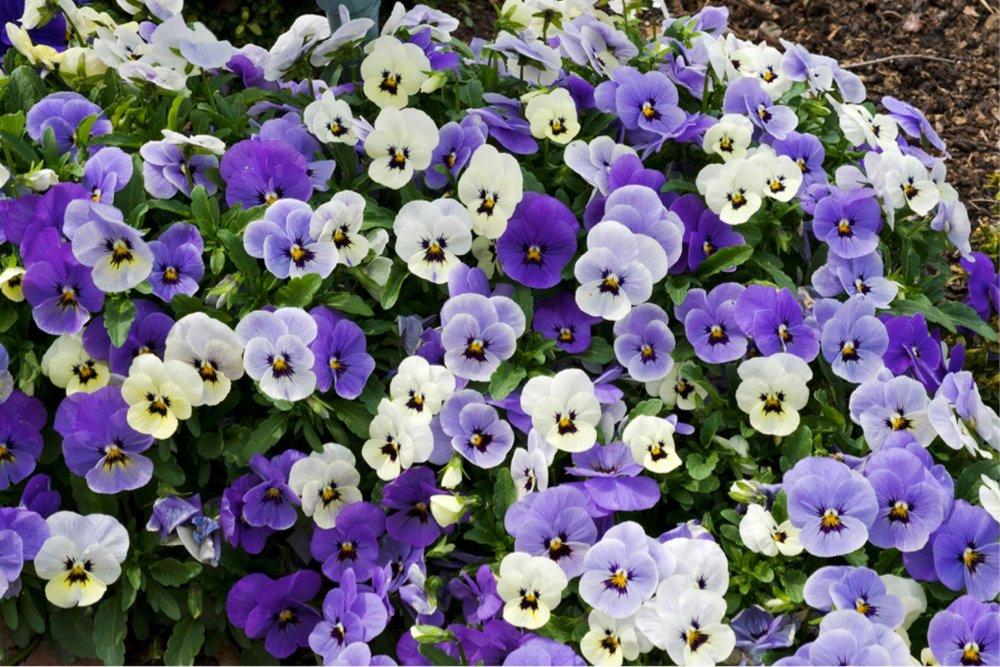 Purples-43.jpg