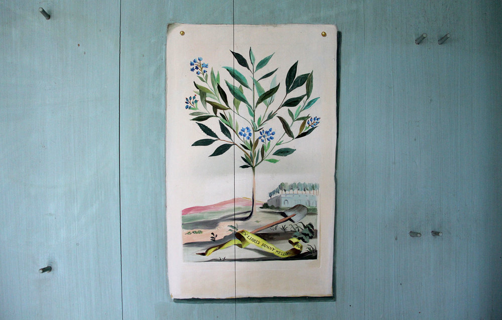 A look inside the pages of one of Bunny Mellon's favorite objects in the Oak Spring Garden Library: Mellon admired Abraham Munting's strawberry-tree illustration so highly that artist Fernand Renard included it in her trompe l'oeil on the walls of her famous greenhouse, with her name inscribed in the yellow ribbon.