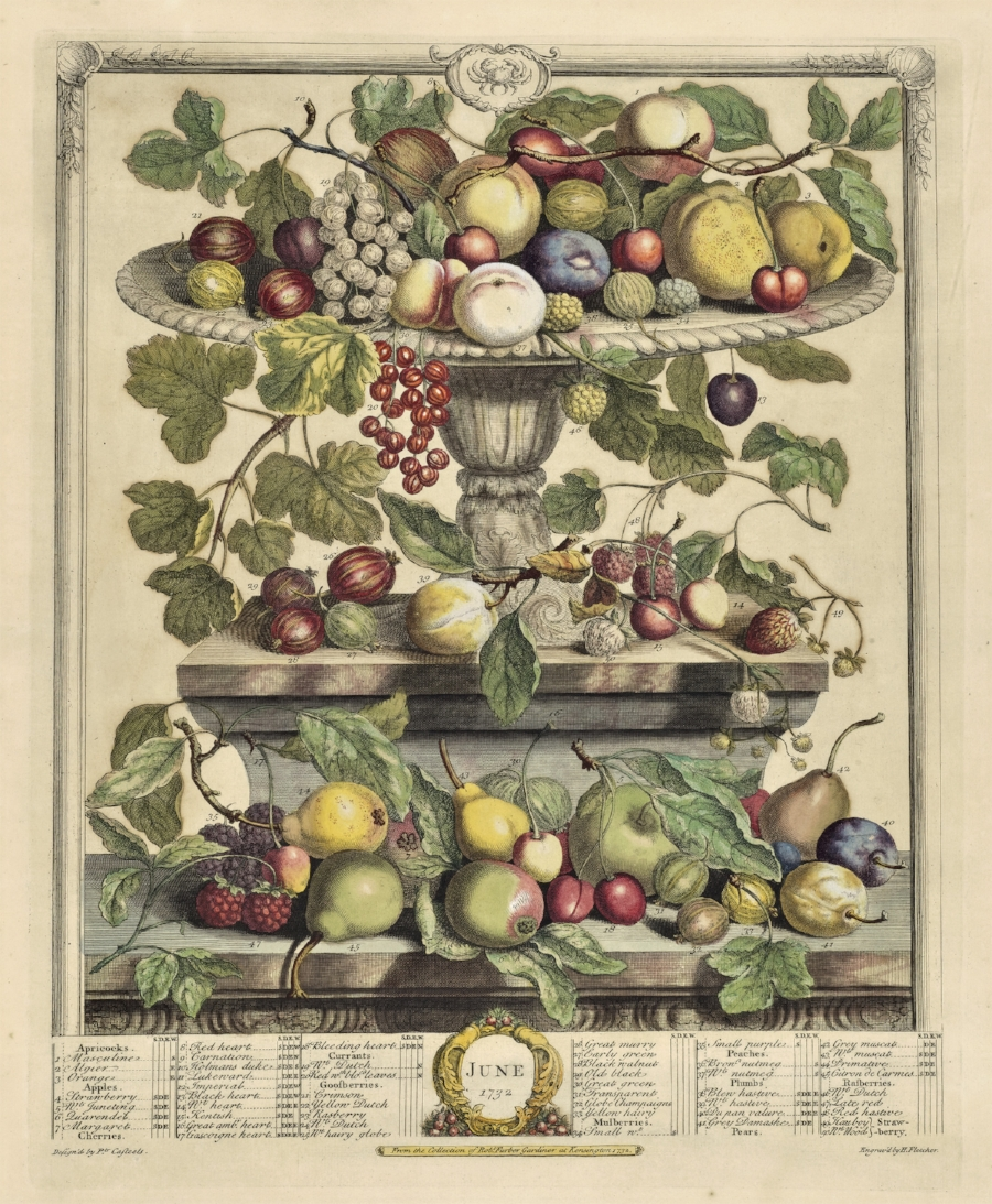 A plate from Robert Furber's  The Flower Garden Display'd .