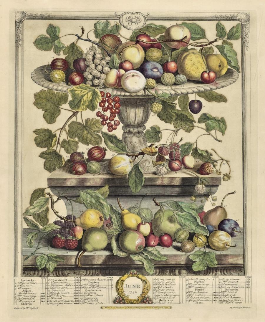 A plate from Robert Furber's The Flower Garden Display'd.