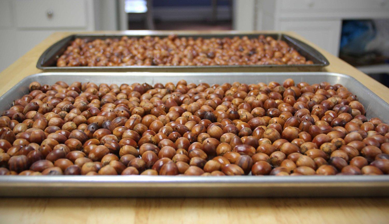 oak spring garden foundation eating acorns