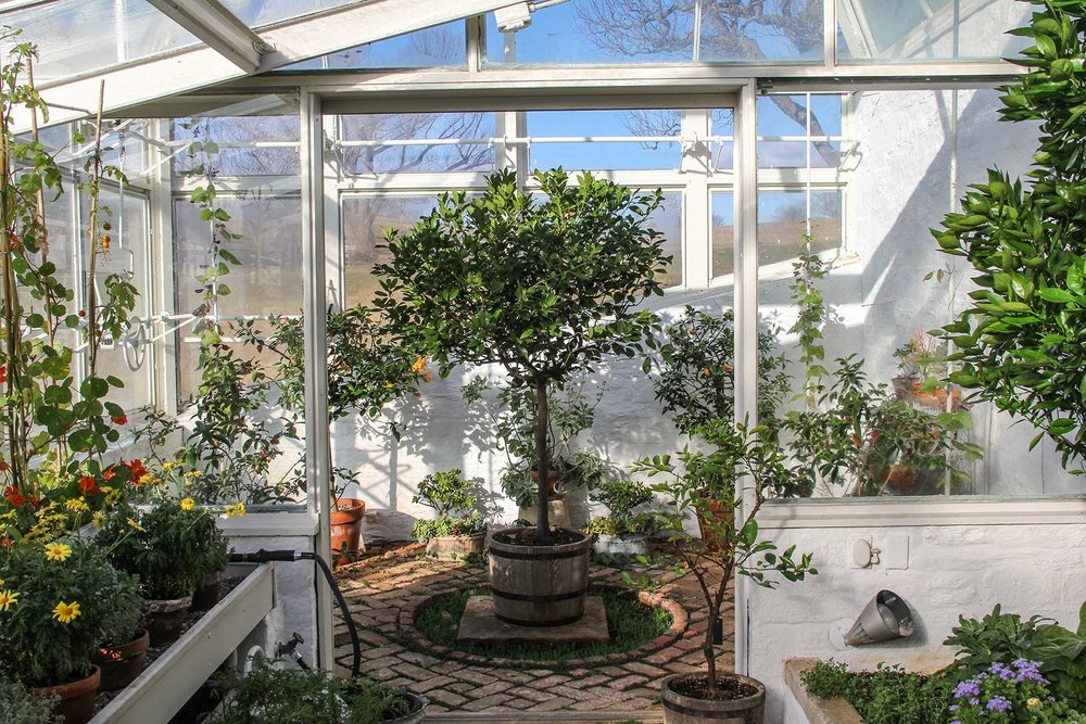 A lemon tree in Bunny Mellon's formal greenhouse