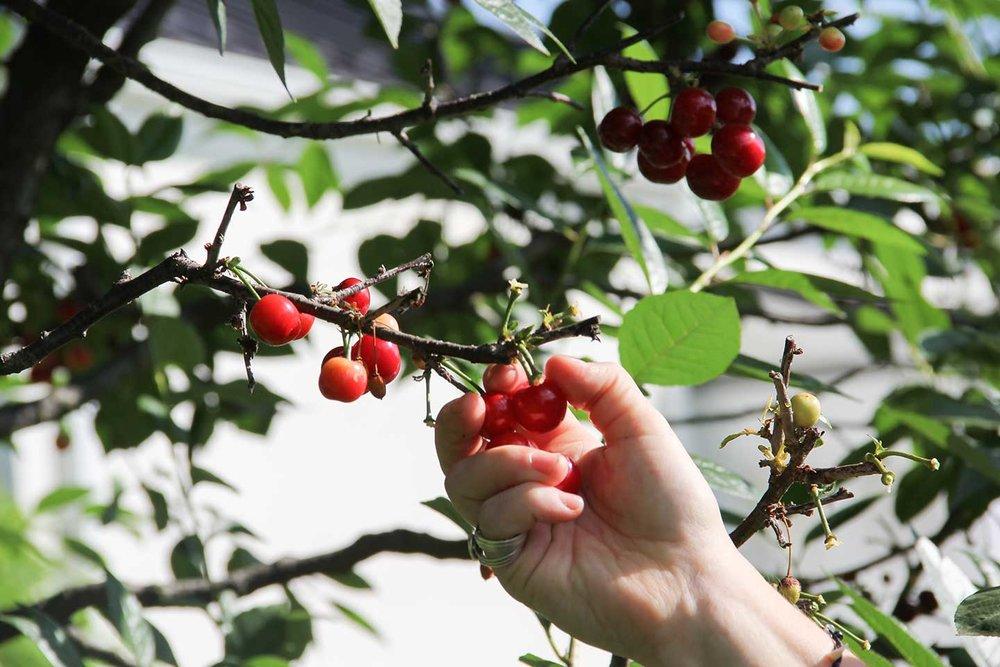 cherrypie1.jpg