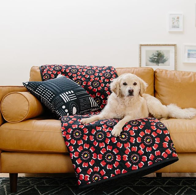 Ruff day? 🐶 Kickstart your weekend with the #VITAGoodLife collection available exclusively on @wayfair and @society6. . . . . . #Flores #wayfairathome #quilt #quiltset #decor #homedecor #lovedecor #bedding #pillows #interiors #interiordesign #dog #puppy #dogstagram #dogsofig #goldendoodle #doodlesofinstagram #color #vibrant #bold #creativity #pattern #shoppingonline #onlineshopping #shoponline #newcollection #newbrand #home