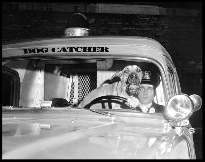 Dog Catcher c.1947 from original 4x5 negative