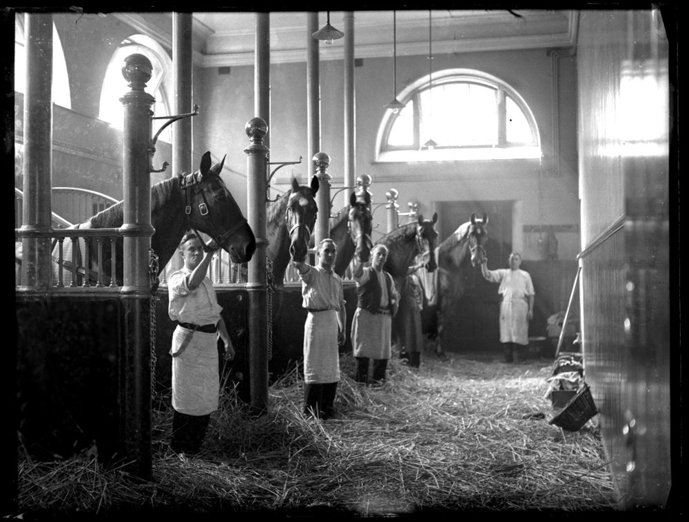 All the Kings Horses , The Kings Jubilee c.1910 from original 5x7 glass plate negative