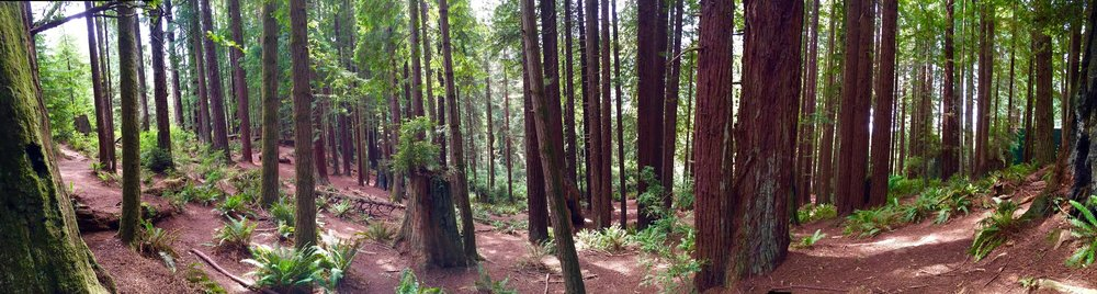 redwoodpano.jpg