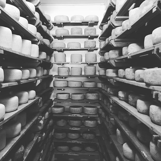 Join us at the @saycheesefair in Cape Town (24th-25th Sept) for a wonderful selection of local artisan cheese 🧀🧀🧀 #saycheesefair #southafricancheeses #artisancheese #gaysguernseydairy