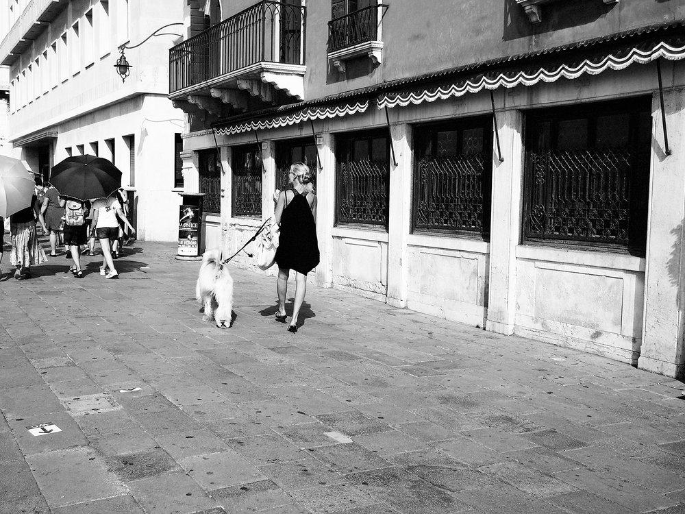 Dog walker, Venice