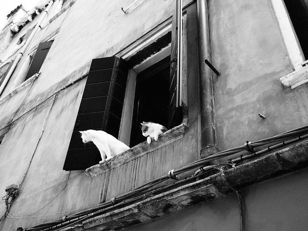 I Gatti, Venice
