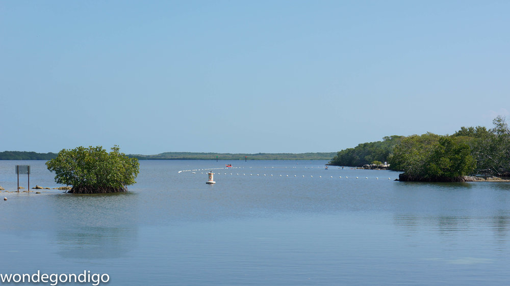 John Pennekamp State Park in Key Largo.  We kayaked among the little mangrove islands (on the right)