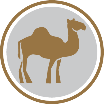 Competent Camel