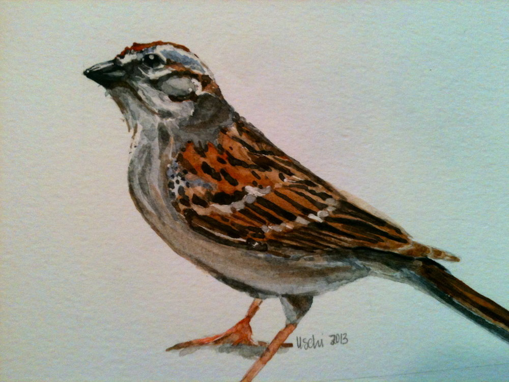 Consider the Sparrow, watercolor, 2013