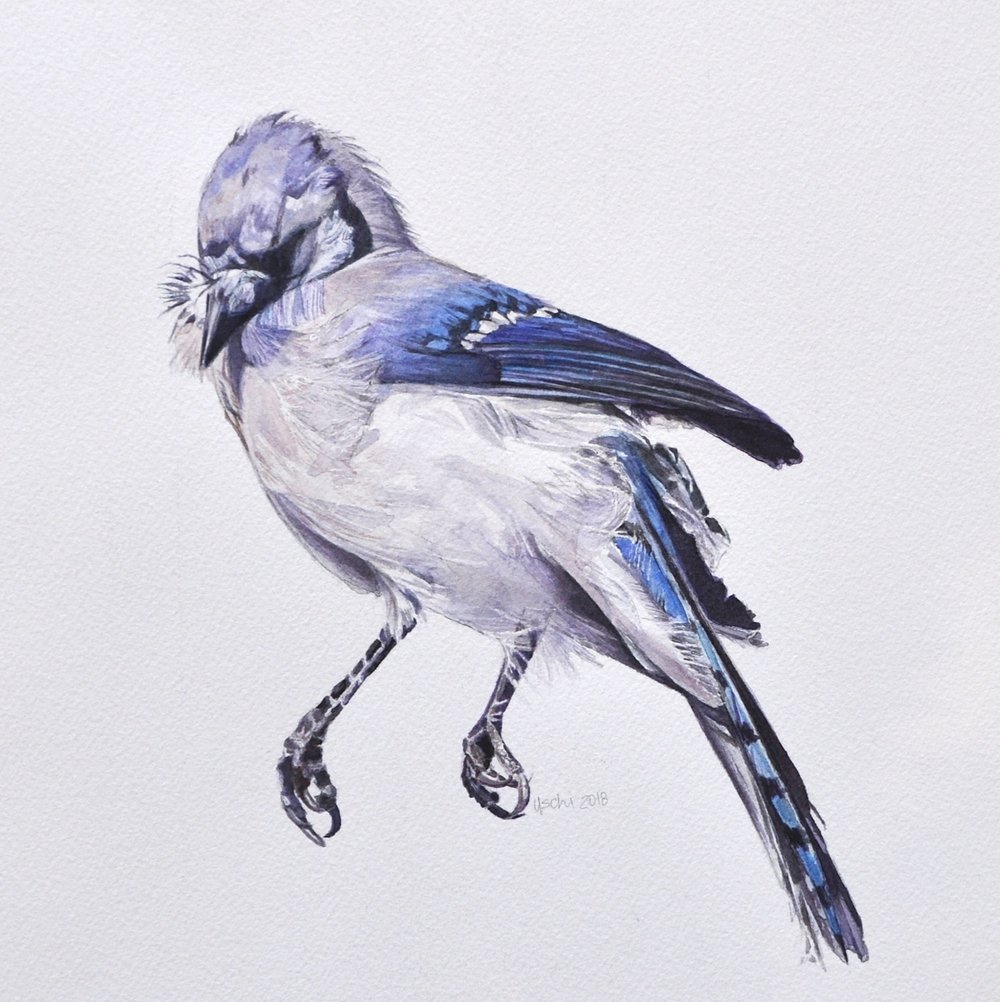 Naked as a Blue Jay