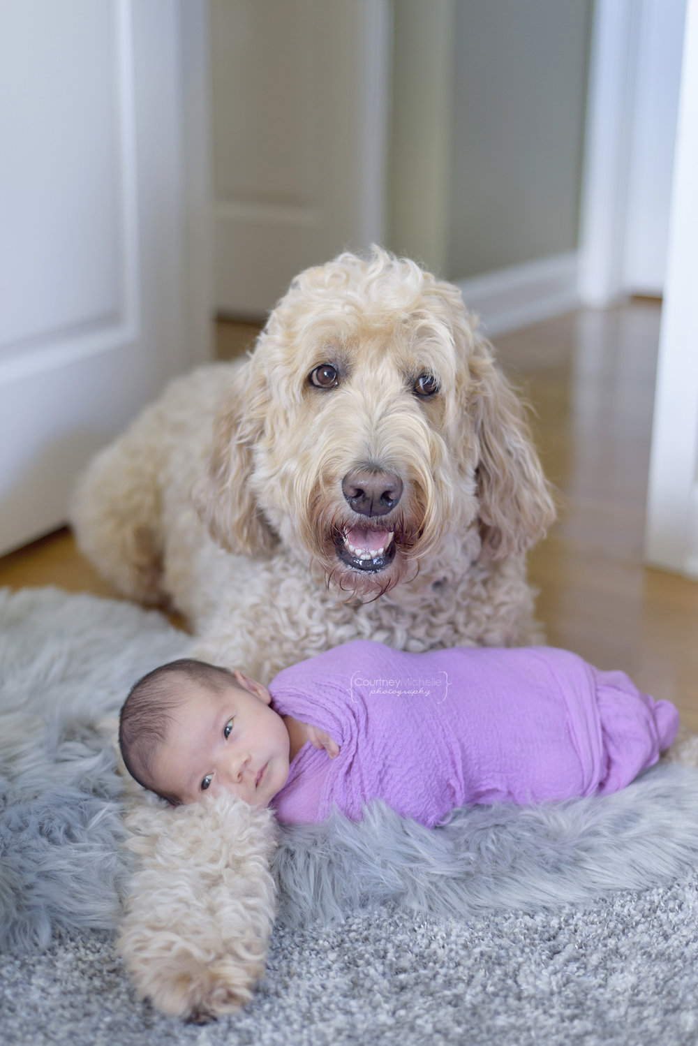 baby-and-goldendoodle-chicago-newborn-photographer-courtney-laper©COPYRIGHTCMP-edit-1878.jpg