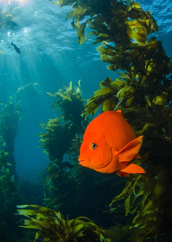 #4 Dive the Kelp Forests of Catalina Island CA -