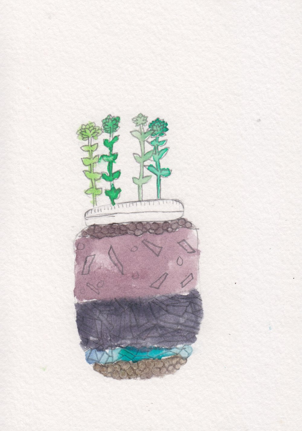 centro_watercolor terrarium_MariaRamos02.jpeg