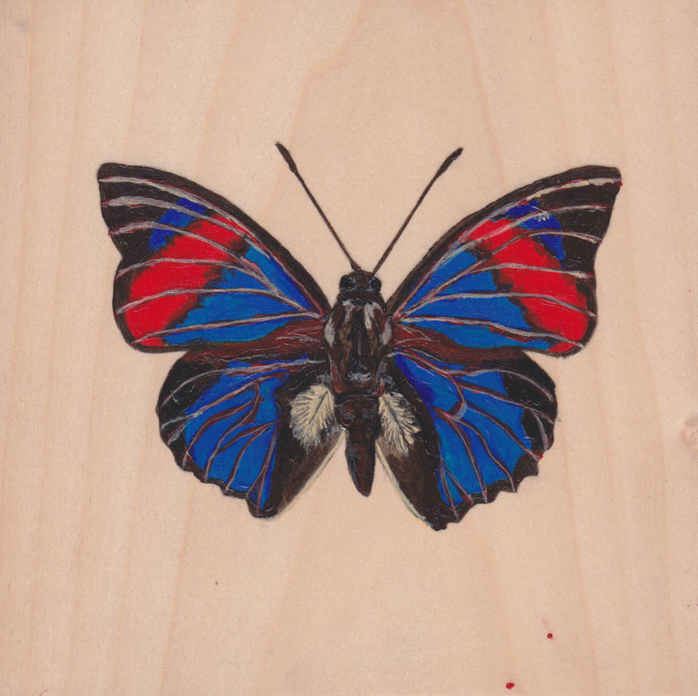 Agrias Narcissus  Butterfly_Painting on wood_01.jpg