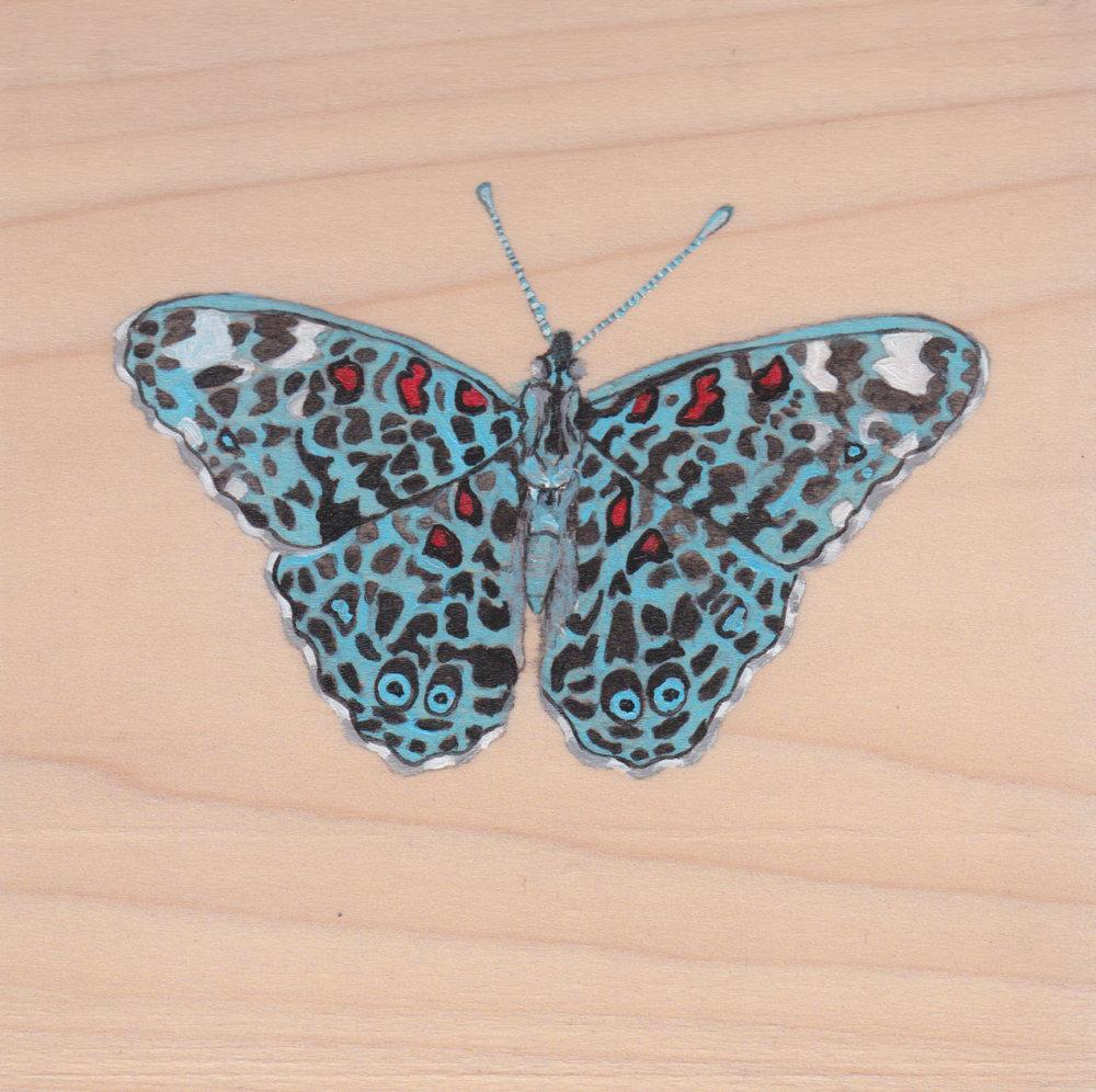Hamadryas Chloe Butterfly_Painting on wood_01.jpg