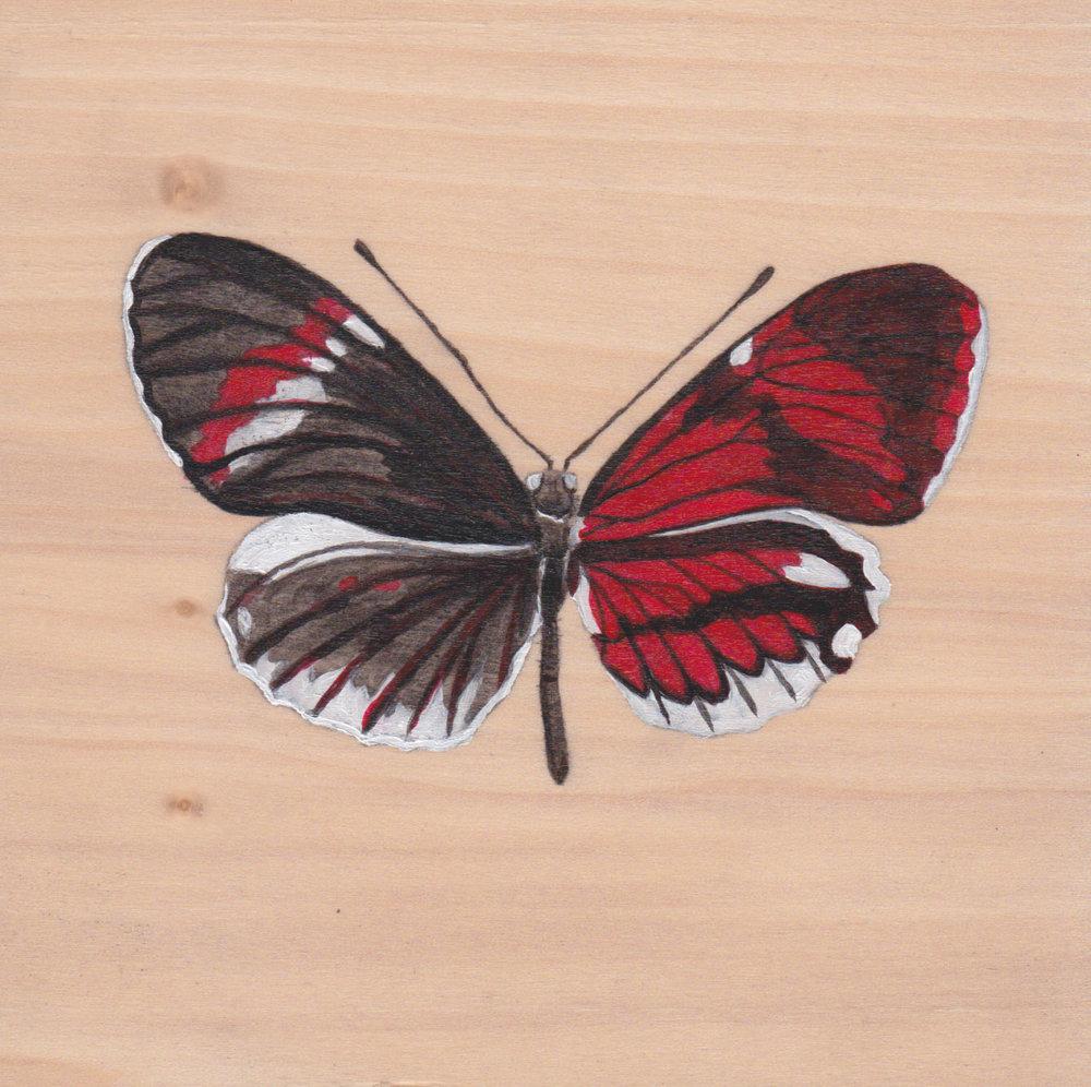 Heliconius Melpomene Gynandromorph Butterfly_Painting on wood_01.jpg