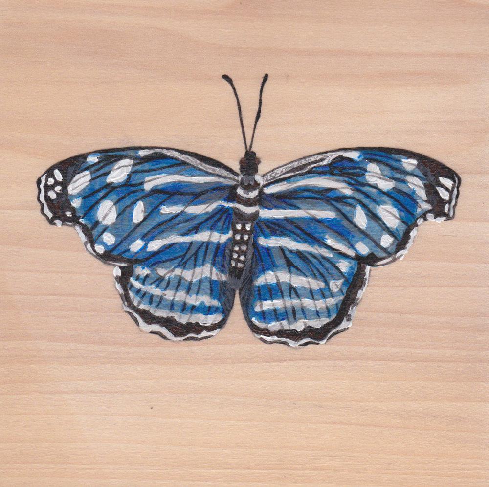 Myscelia Cyaniris Butterfly_Painting on wood_01 1.jpg