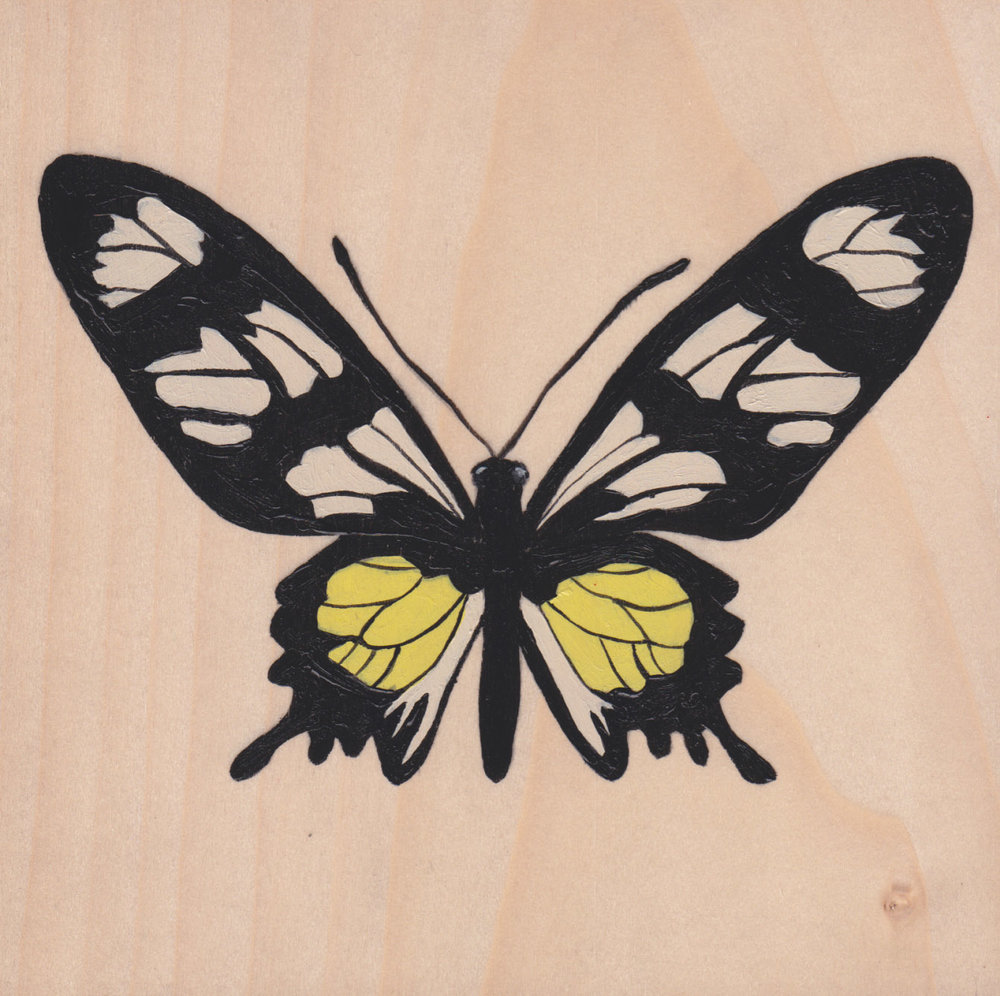 Parides Hahneli Butterfly_Painting on wood_01.jpg