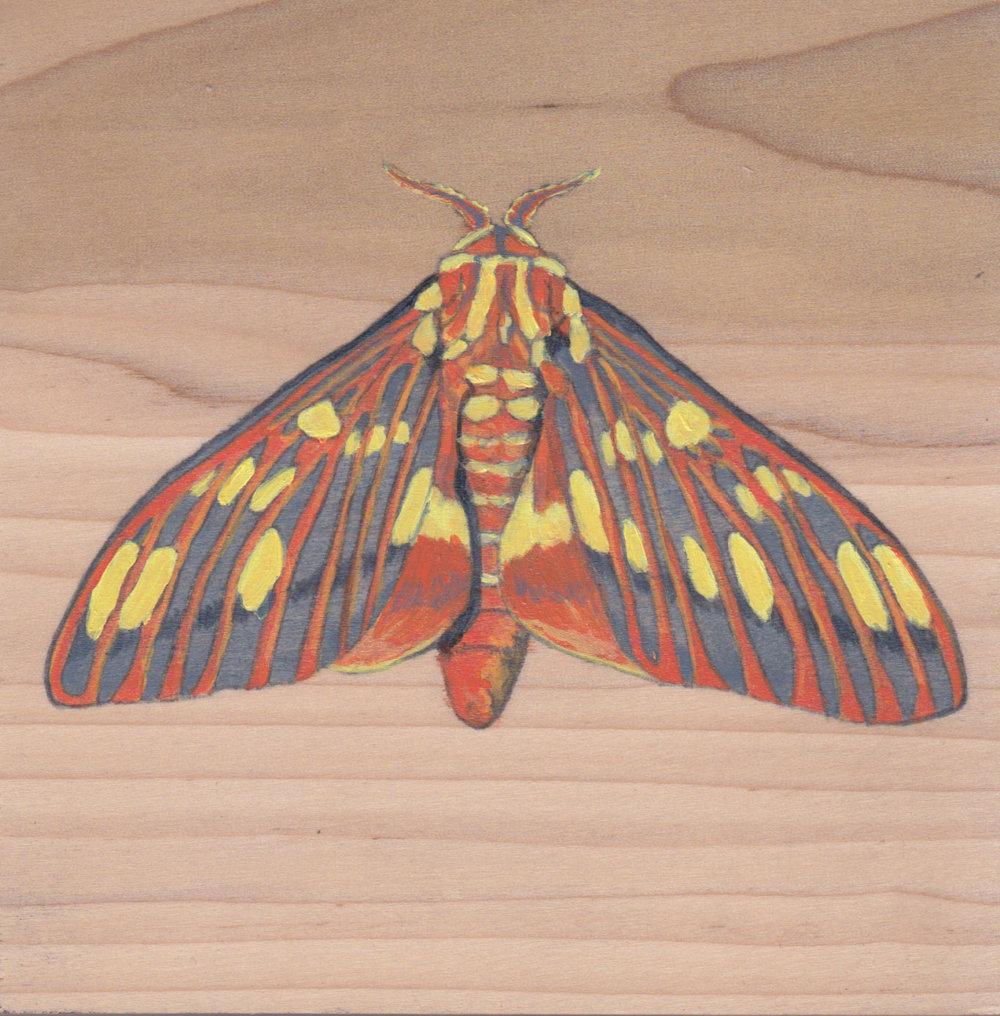 Regal Moth_Painting on wood_02.jpg