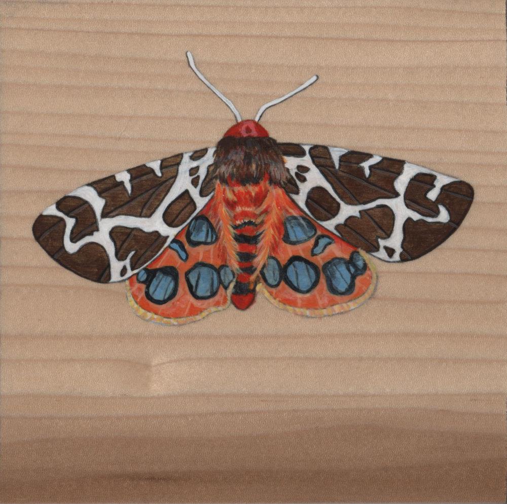 Arctia Caja Moth_Painting on wood_01.jpg
