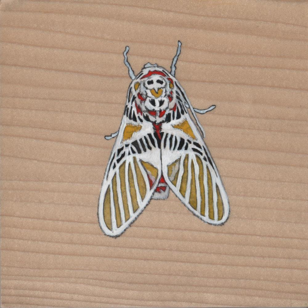 Idalus herois Moth_Painting on wood_01.jpg