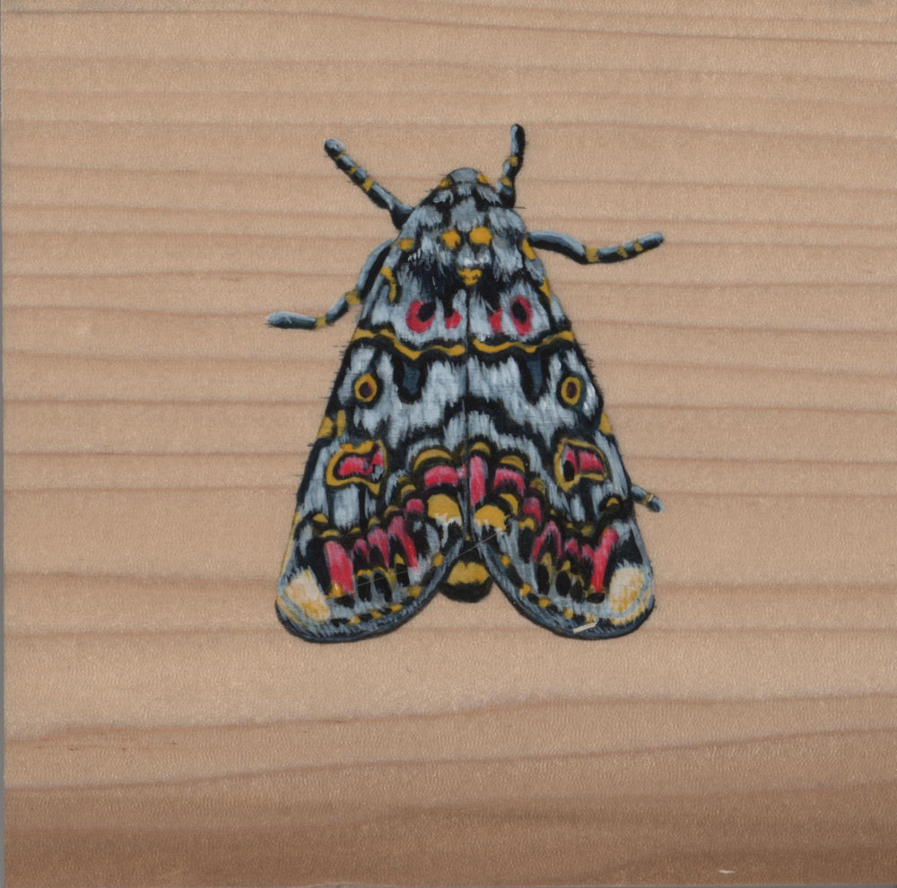 Polytela Gloriosae Moth_Painting on wood_01.jpg